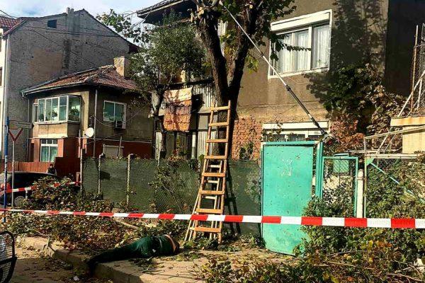 Трагедия в Благоевград! Мъж почина след падане от дърво