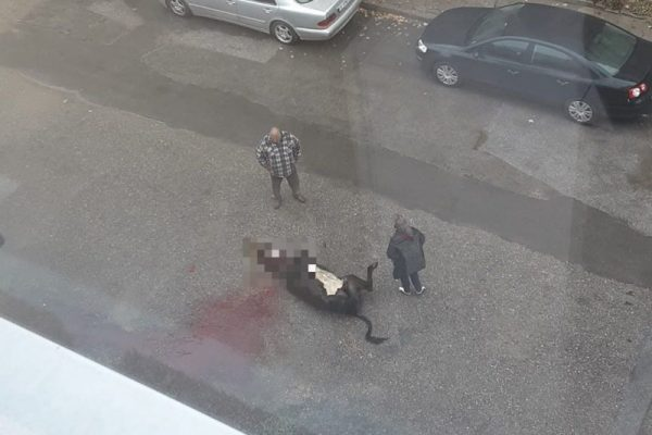 Мъж закла крава пред жилищен блок в Гоце Делчев